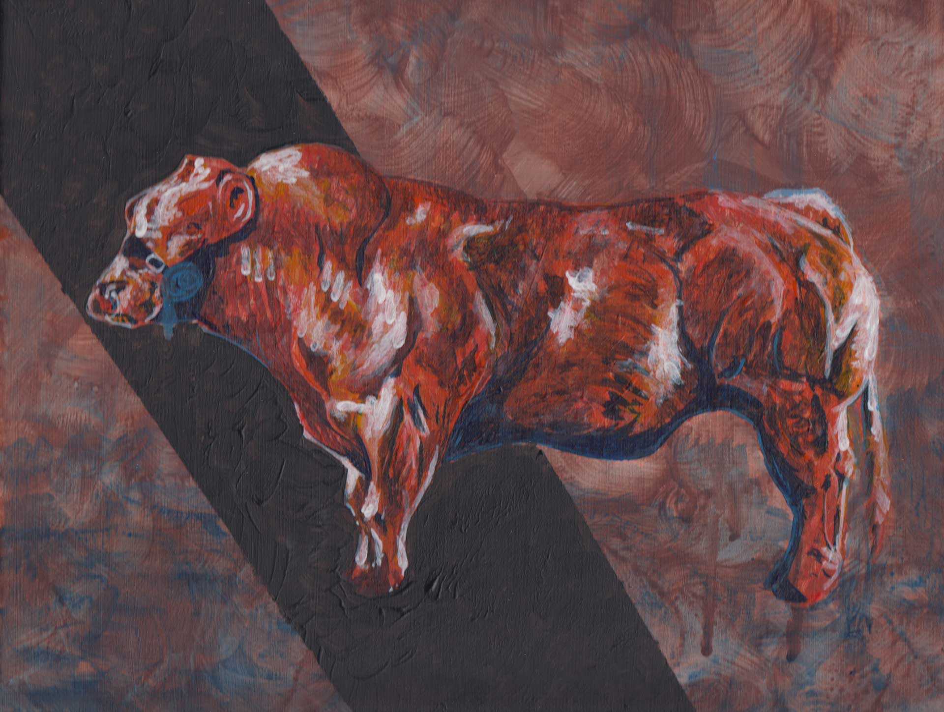 Belgian Blue, the muscular bull, painting by Alessandro Bruno.